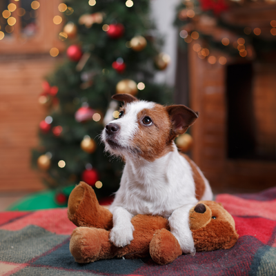 5 Ways to Reduce Pet Anxiety During the Holidays