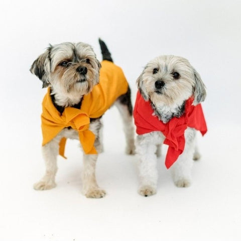2 small breed dogs wearing capes