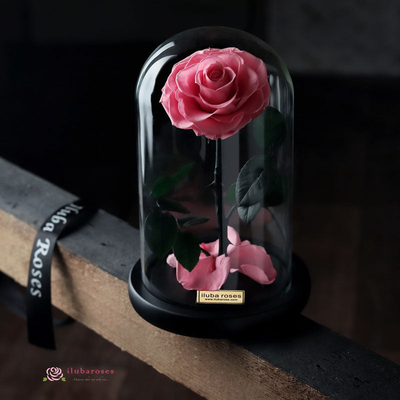 pink rose flower in glass dome at Iluba Roses gift shop