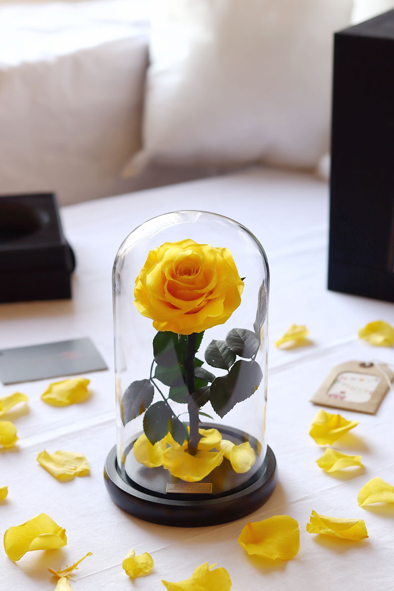 yellow rose gift in glass dome at Iluba Roses flower shop
