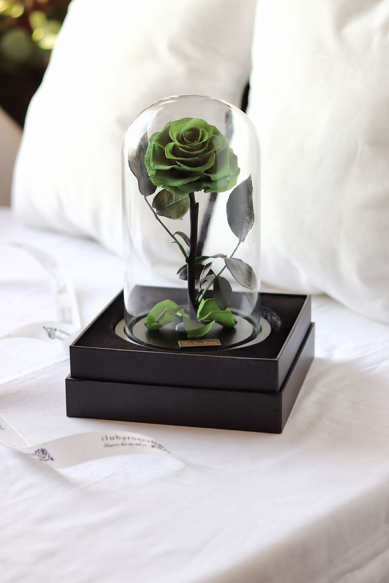 green rose in glass vase at Iluba Roses gift shop