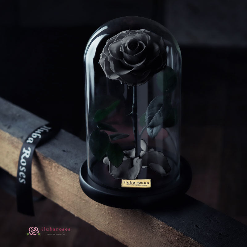 black rose flower in glass at Iluba Roses shop in Riyadh