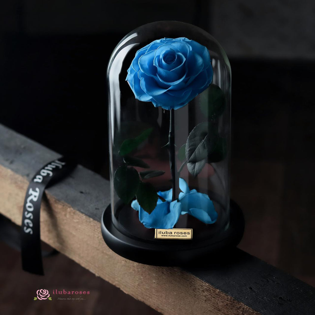 lake blue rose gift at Iluba Roses gift store