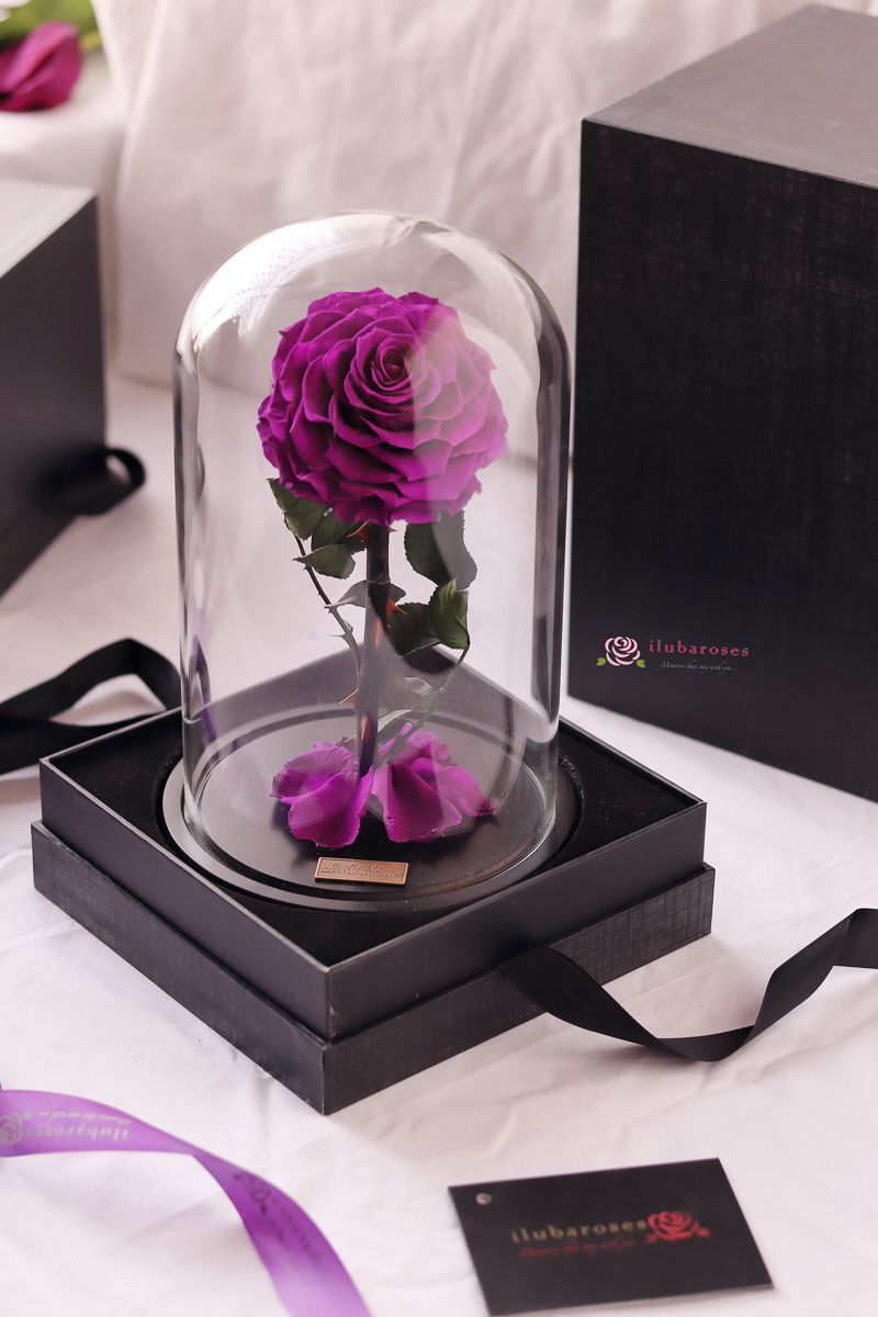purple rose gift in glass at Iluba Roses flower shop