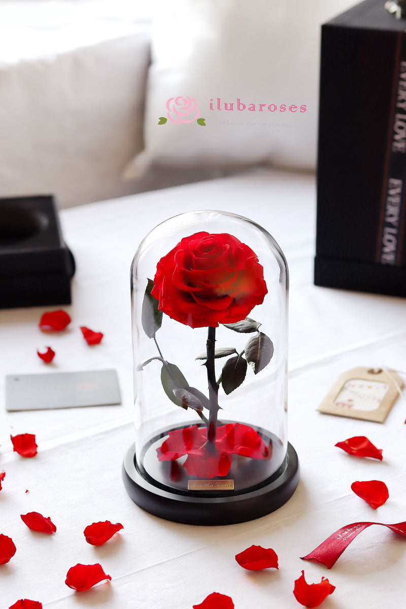 red rose gift in glass dome at Iluba Roses flower delivery shop