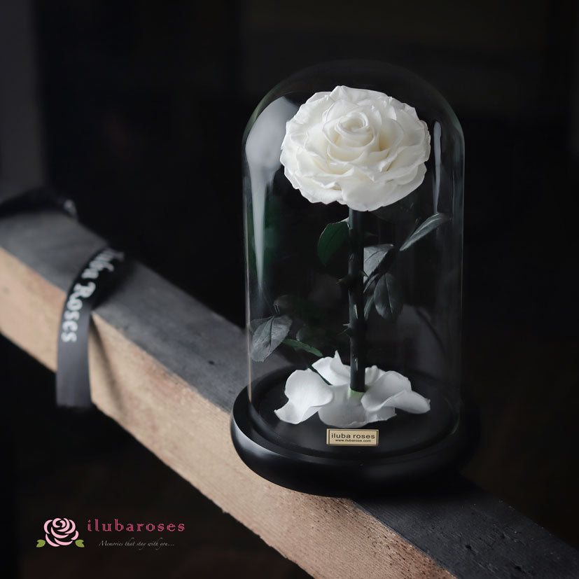 white rose gift in glass dome at Iluba Roses flower shop