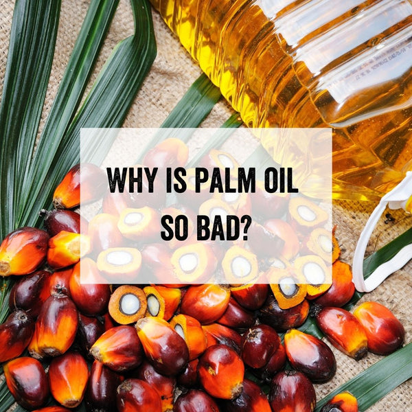 What is Palm Oil and Why is it So Bad? (Your Palm Oil Questions Answered)
