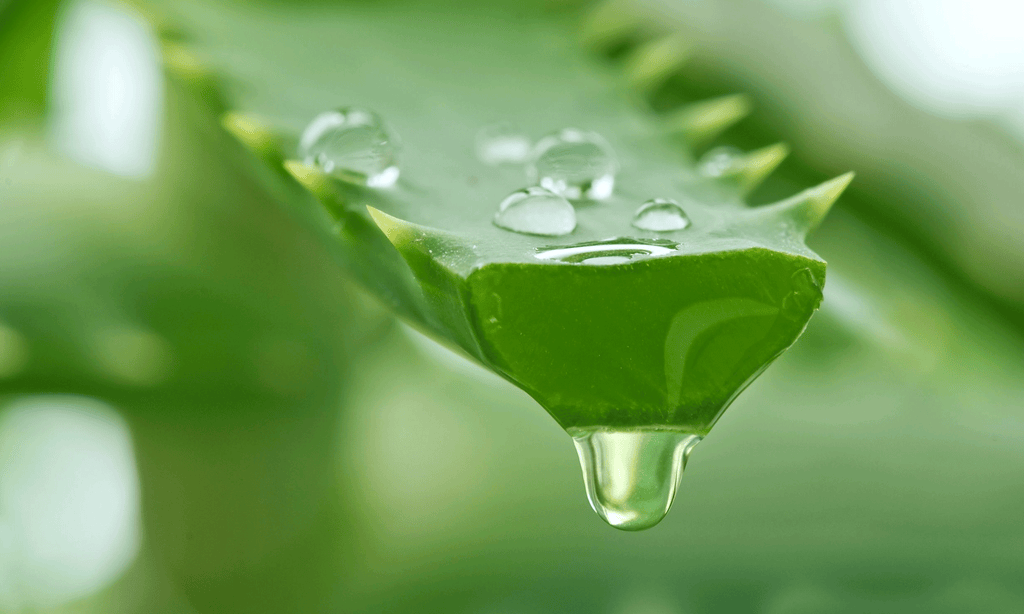 5 Reasons Why You Should Include Aloe Vera in Your Skincare Routine