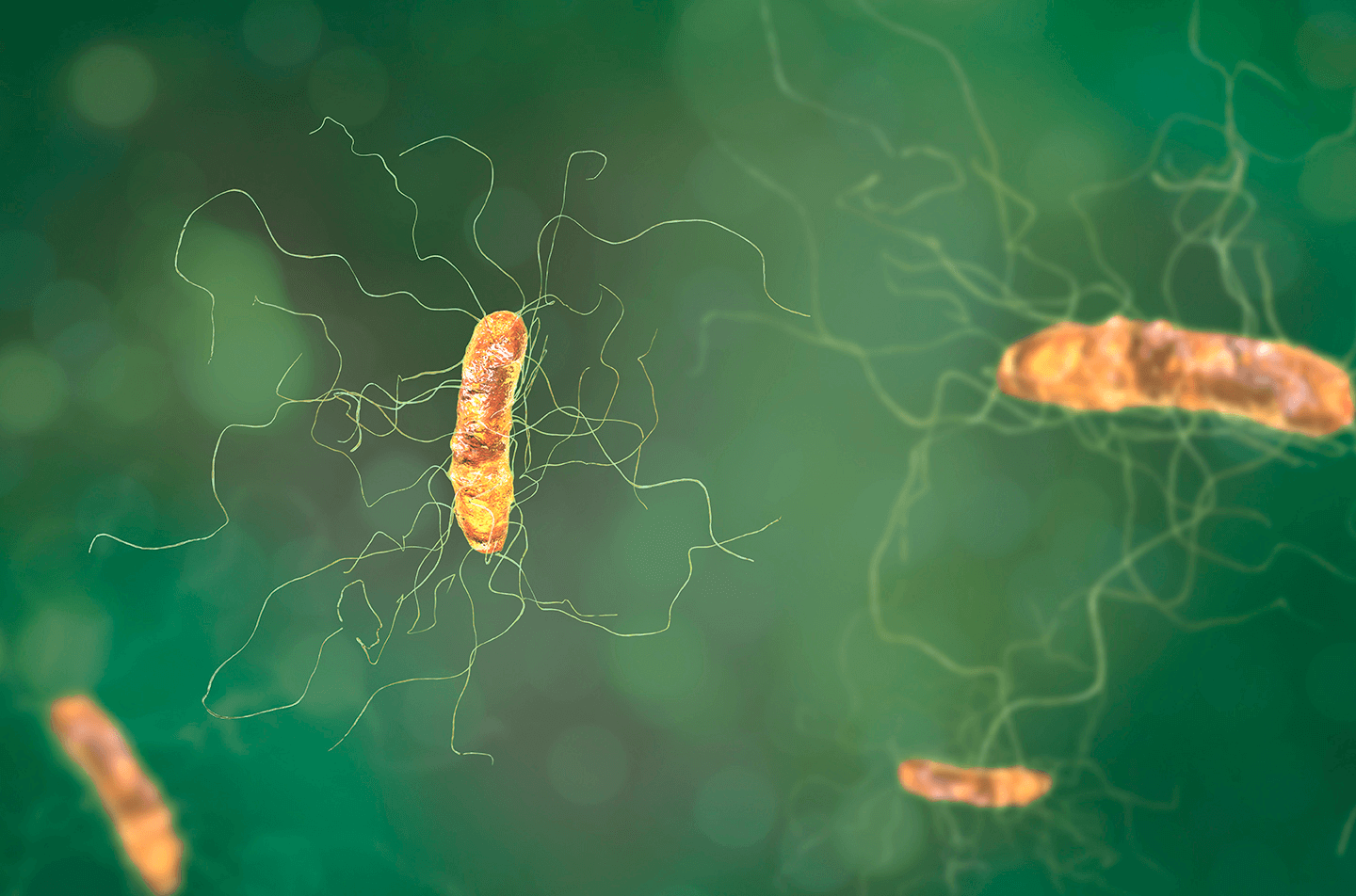 Menace to Your Gut Flora: Understanding C.Diff and How it Affects Your Microbiome