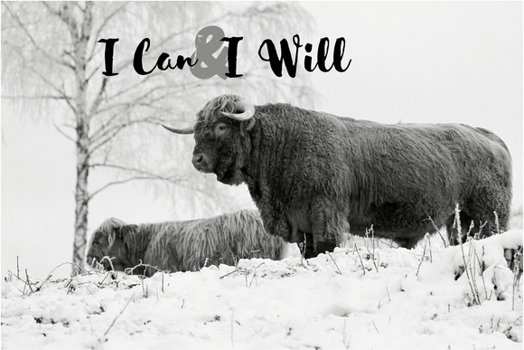 Fluffy Cow Canvas Wall Art - I can & I will