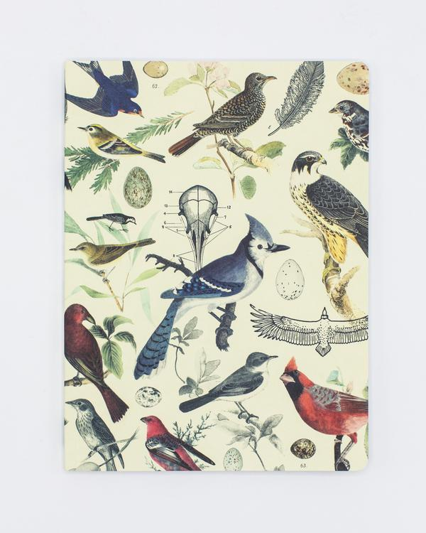 Birds: Ornithology Plate 2 Softcover Notebook