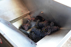 Processing Garnacha for rosé in Es Verge