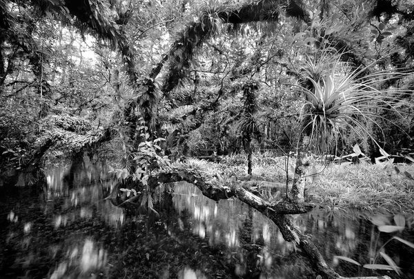 Cigar Orchid Pond by Clyde Butcher