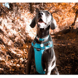 Red Dingo Padded Harness Turquoise