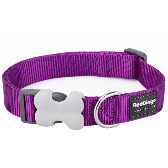Red Dingo Plain Dog Collar Purple