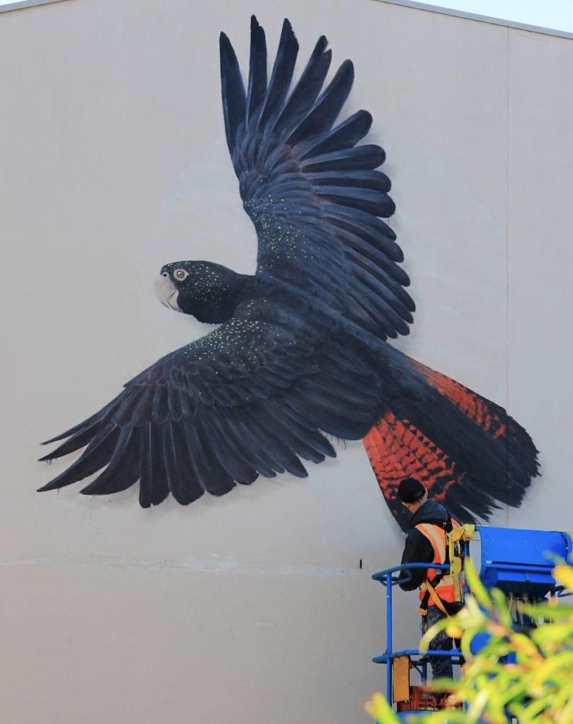 Ian Mutch paiting a forest red tailed cockatoo