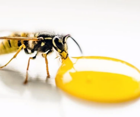 saving bees with technology