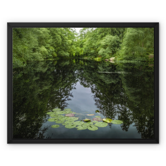 Lily Pads! - High Dam Tarn , Lake District Framed Canvas