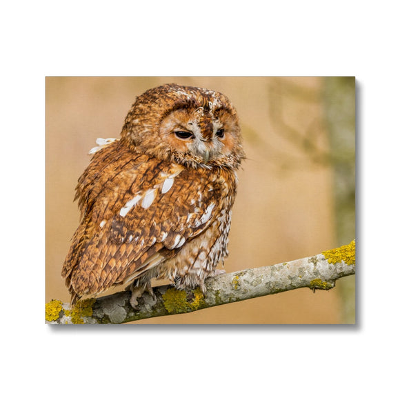 Wisdom - Tawny Owl Canvas - Sydspicsprints