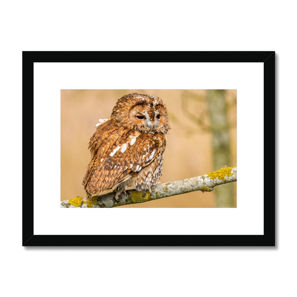 Wisdom - Tawny Owl Framed & Mounted Print - Sydspicsprints