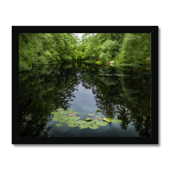 Lily Pads! - High Dam Tarn , Lake District Framed Print