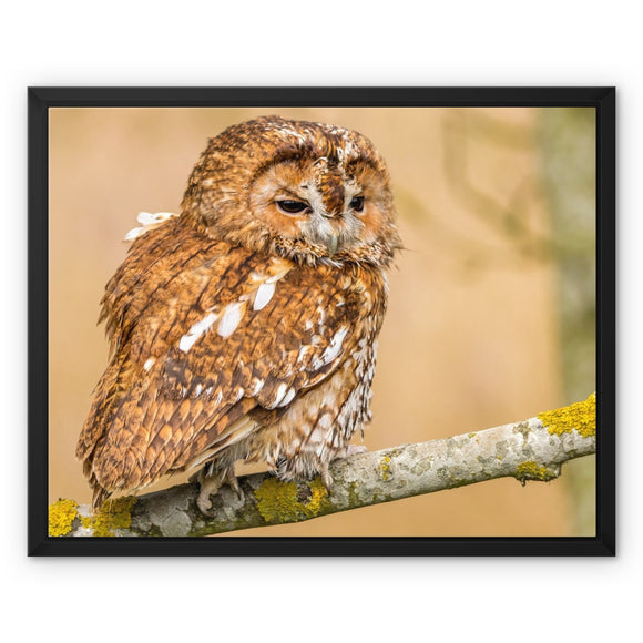 Wisdom - Tawny Owl Framed Canvas - Sydspicsprints