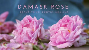 Damask Rose and your skin