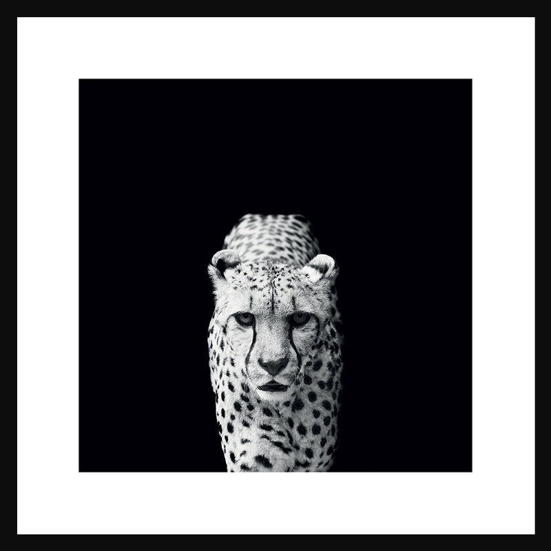 Cheetah Portrait in Black Frame
