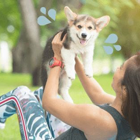 Exercise and fitness training with your dog