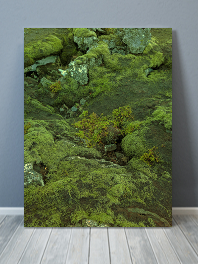 Green Forest Iceland Canvas Art