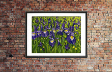 Load image into Gallery viewer, Iris landscape acrylic painting in expressive style. Bold purple, yellow, white, green with leaves and flowers. Framed in black by Judy Century Art. Shown hanging on a red brick wall