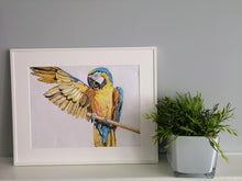 Load image into Gallery viewer, Art Print of original coloured pencil drawing of a macaw parrot, stretching out his large wings while perched on a branch. Framed in White frame, sitting on a shelf next to a green leaved plant. Elegant artwork featuring yellow, blue, black and brown by Judy Century Art.