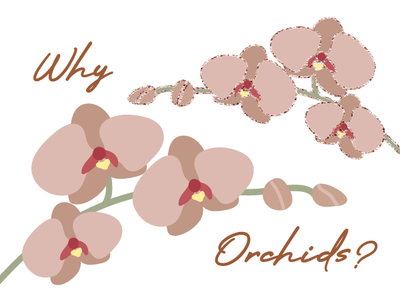 Why Orchids over Roses?