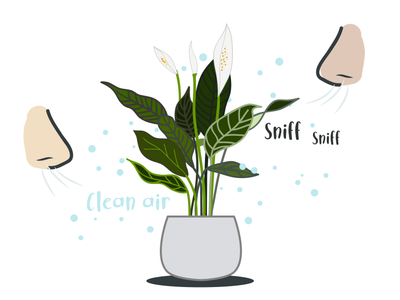 Top 5 Air Purifying House plants