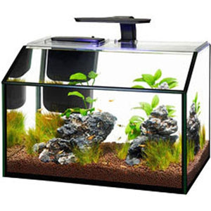 AQUEON SHRIMP LED AQUARIUM KIT