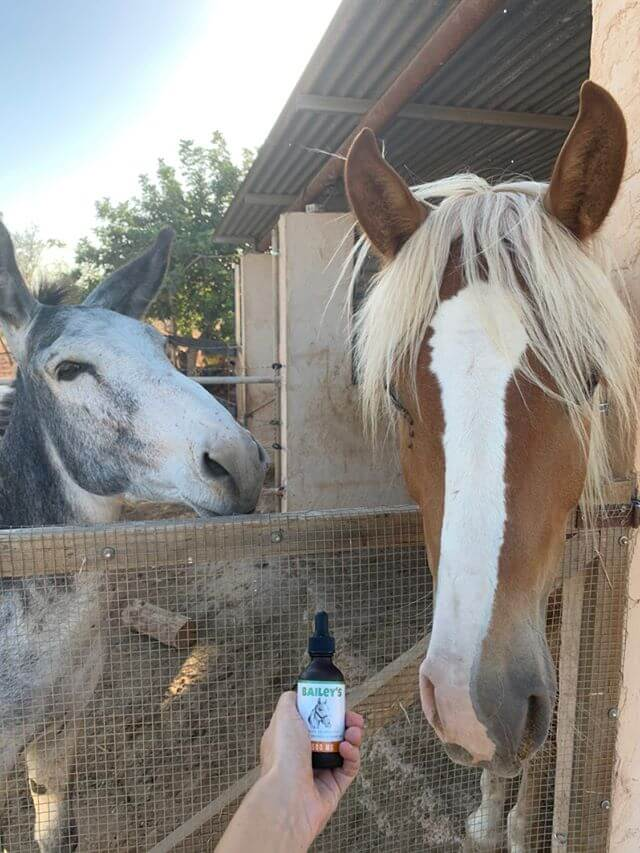 CBD Oil For Horses ; Full Spectrum Hemp Oil ; Equine Health Products - thehemphaus