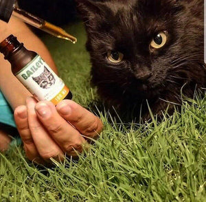 Bailey's Full Spectrum Hemp Oil For Cats w/ 100MG Naturally Occurring CBD - thehemphaus