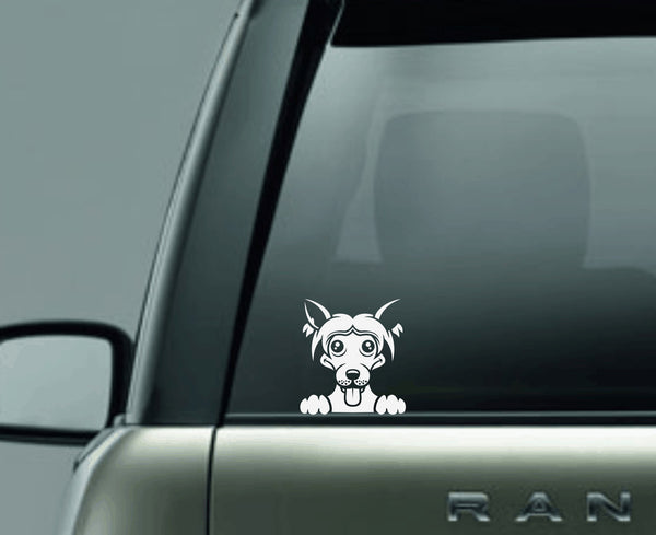 Chinese Crest Peek Decal