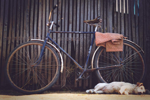 biking with dog - justbikebags