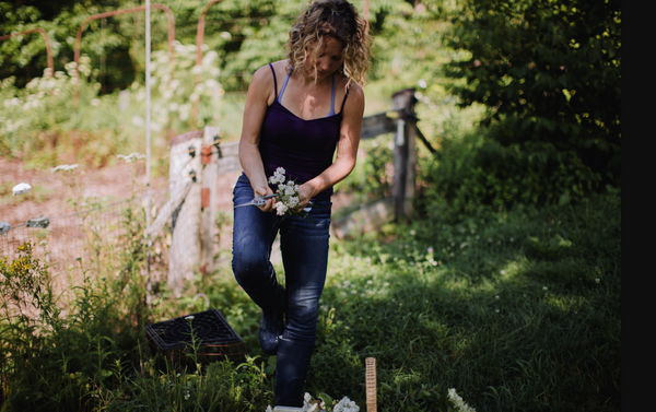 founder of red root foraging for wild plants