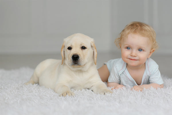 Baby Proofing Your Dog!