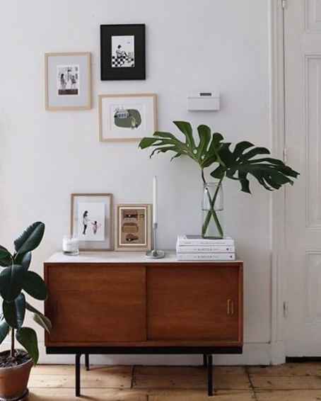 What's Trending in Plants- Indoor Greenery