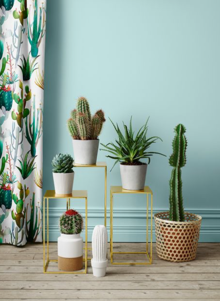Cactus Friends | Indoor House Plants, Accents & Trends