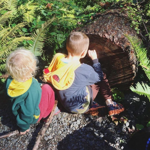 Two young boys with light colored hair crouch down next to a fallen tree and carefully count the rings. It is a sunny day and there are many green ferns around them.