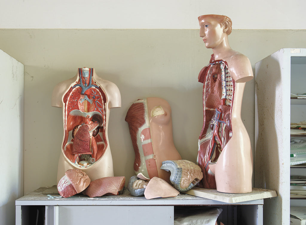 mannequin of body parts
