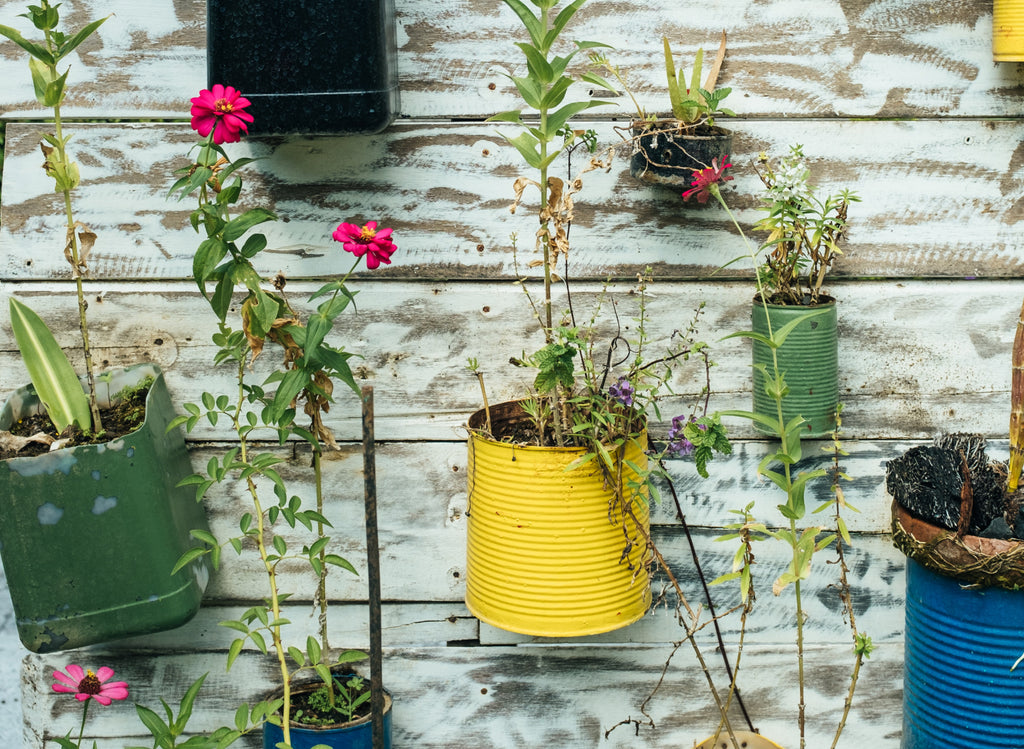 plants grown on recycled paint cans