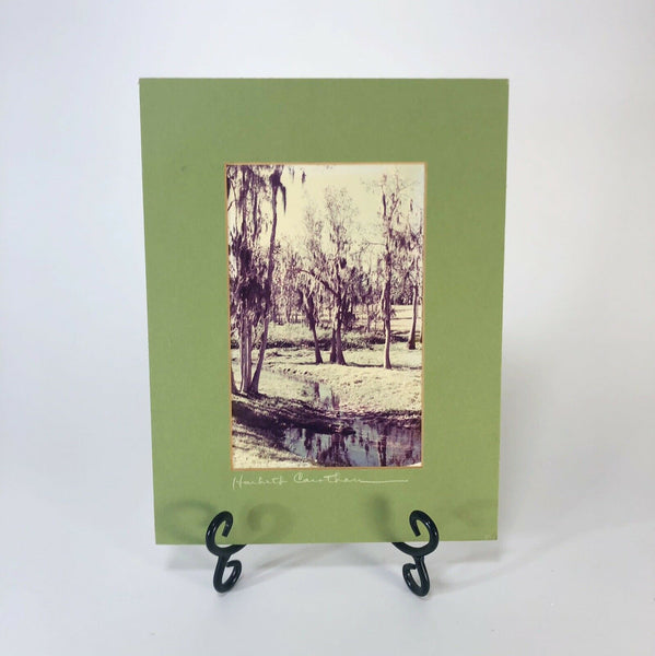 "Vintage signed swamp photography Matted  12"" x 7"""