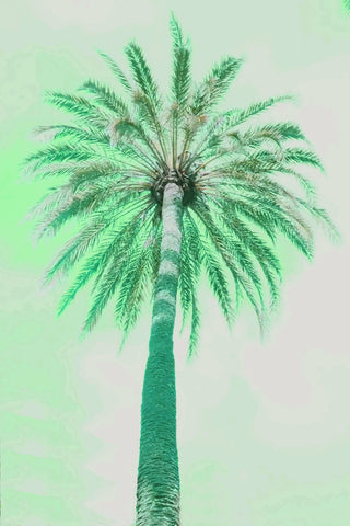 13 Palms - Palm II