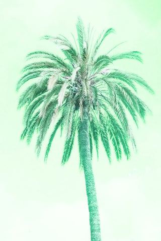 13 Palms - Palm IV