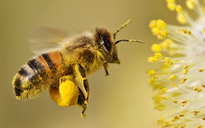 Fascinating Facts About Bees